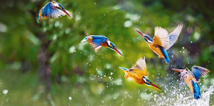 Shivapuri & Godavari bird watching