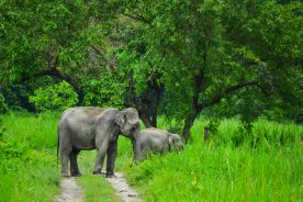bardia national park safari