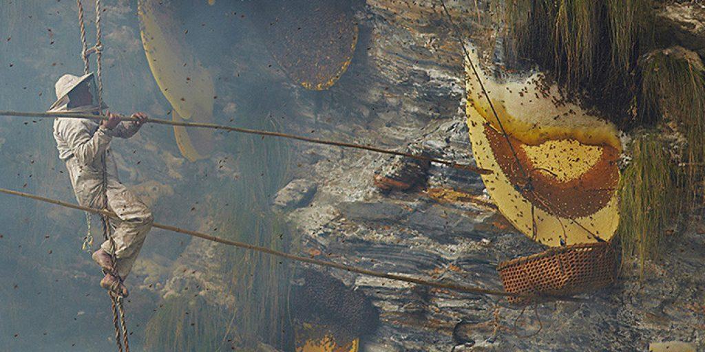 Nepal Honey- Wild Honey Hunting in Nepal
